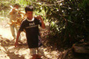 Đổ xô vào rừng tận diệt cây thuốc quí