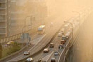 Ô nhiễm không khí đẩy nhanh tốc độ lão hóa ở não