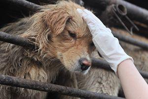 Nước Anh tranh luận yếu tố văn hóa trong ăn thịt chó