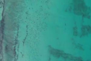 Cảnh tượng cực hiếm hàng vạn cá mập di cư dọc bờ biển
