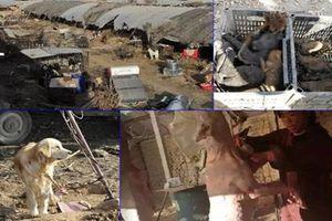 Kinh hoàng cảnh tàn sát trong trại chó thịt ở Trung Quốc
