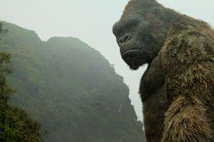 Kong và du lịch