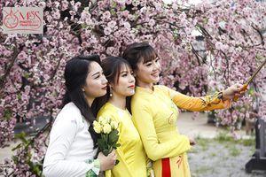 Miss Photo 2017: Thí sinh khoe sắc ở Thảo nguyên hoa