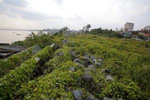 Sông Đồng Nai vẫn phập phồng... chờ