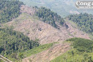 Ai đứng sau vụ phá rừng phòng hộ Tiên Lãnh? (Kỳ cuối: Bất lực hay có sự tiếp tay?)