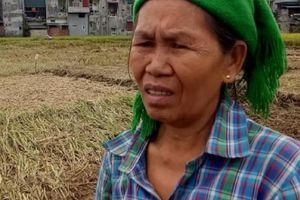 Lời kể nhói lòng của bà con vùng lũ: Mấy tháng tới biết lấy gì ăn?