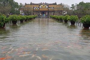 Cảnh tượng hiếm gặp: Cá bơi lội tung tăng giữa Đại nội Huế