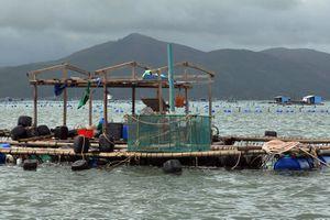 Mất tiền tỷ sau bão, ngư dân làng chài Vũng Rô trắng tay