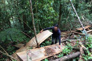 Kon Tum: Kết quả kiểm tra vụ 'xẻ thịt' rừng phòng hộ