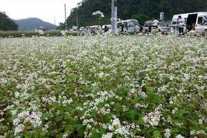 Lễ hội Hoa tam giác mạch Hà Giang lần thứ 3