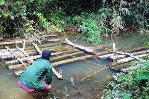 Thanh Hóa: Truy tìm nguồn gốc hàng loạt gỗ cất giấu dưới hồ
