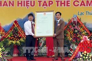 Đón nhận văn bằng bảo hộ nhãn hiệu tập thể 'Cam Lạc Thủy'
