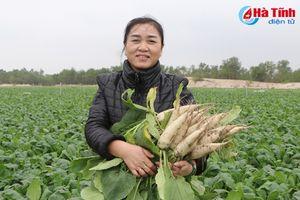 Nông dân bãi ngang Hà Tĩnh bội thu sản phẩm vụ đông