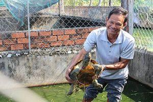 Những trang trại rùa 'đẻ' ra tiền của nông dân Việt