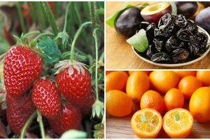 10 loại trái cây giàu CANXI hơn cả sữa, nuôi thai nhi CHÂN DÀI thườn thượt, CHẤT XÁM phát triển ầm ầm