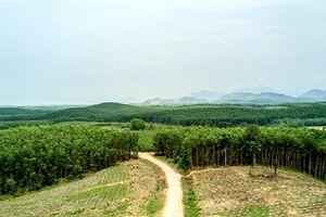 Triển vọng khôi phục rừng ở Việt Nam