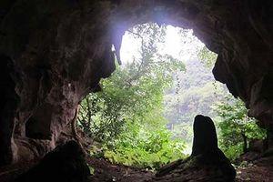 Xây dựng Quy hoạch tổng thể bảo tồn hang Con Moong