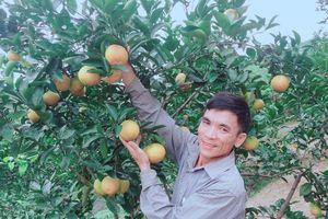 Hà Tĩnh trăn trở xây dựng thương hiệu cam nổi tiếng Bắc Trung bộ