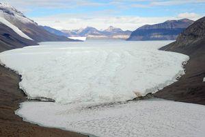 Cuộc 'truy tìm' khu rừng 280 triệu năm trước ở Nam Cực