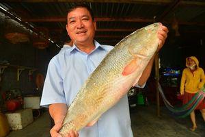 Cá Sủ vàng quý hiếm trị giá bạc tỷ câu được ở Khánh Hòa 'chất' cỡ nào?