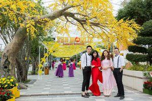 Giới trẻ háo hức chờ đón Lễ hội 'Mai vàng sắc xuân' Sun World Danang Wonders