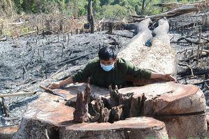 Khởi tố, bắt tạm giam đối tượng chủ mưu phá 15ha rừng