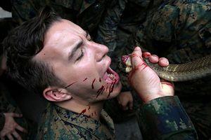 Cận cảnh lính Mỹ uống máu rắn hổ mang, ăn tắc kè trong tập trận Hổ mang vàng