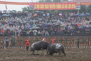 Rà soát công tác tổ chức Lễ hội Chọi trâu xã Hải Lựu
