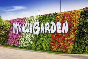 Check in vườn hoa lớn nhất giữa sa mạc