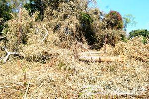 Đắk Nông: Tạm giữ 5 đối tượng phá hàng chục ha rừng chiếm đất
