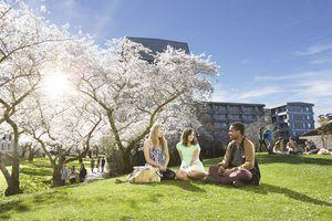 5/8 trường đại học công lập của New Zealand chấp nhận học sinh Việt Nam vào thẳng