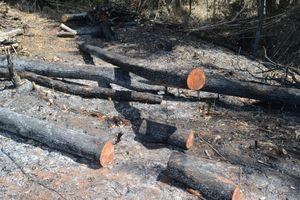Đắk Nông: Khởi tố, bắt tạm giam kẻ chủ mưu vụ phá 15 ha rừng tại Đắk G'Long