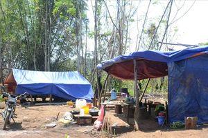 Tạm giữ 5 đối tượng phá rừng trước tết tại Đắk Nông