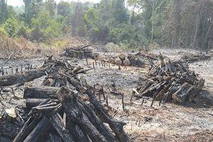 Đắk Nông khởi tố, bắt tạm giam đối tượng chủ mưu phá 15ha rừng