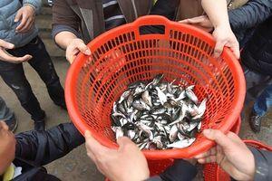 Hơn 5 tấn cá được thả xuống sông Hồng trong dịp lễ phóng sinh
