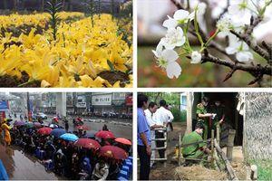 Tin tức Hà Nội ngày 25.2: Đội mưa xếp hàng mua vàng cầu may; Xót xa những vườn hoa ly bung nở