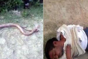 Ấn Độ: Cắn đứt đầu rắn để trả thù rồi lăn quay bất tỉnh