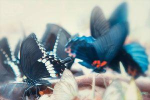 Kỳ thú vườn quốc gia Nam Cát Tiên