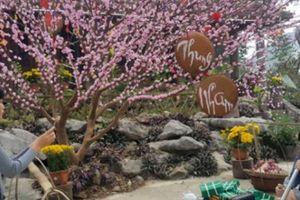Thiếu nữ thích thú 'tự sướng' giữa vườn thuốc lào ở Thung Nham