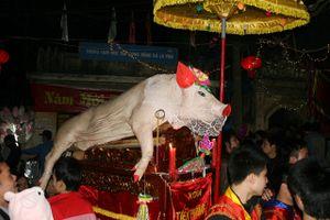 Về La Phù nghe chuyện mắc màn nuôi 'ông lợn' rước lễ