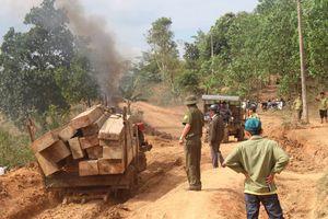 Bắt giữ 5 xe công nông vận chuyển hàng chục m3 gỗ trái phép