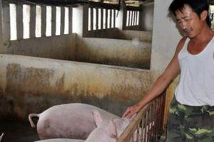 Hà Nội không khuyến khích chăn nuôi nhỏ lẻ