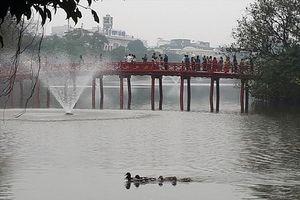 Hồ Gươm lại xuất hiện 5 con vịt trời