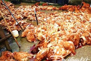 Gia Lai: Ăn thịt gà chết, hàng chục người bị ngộ độc