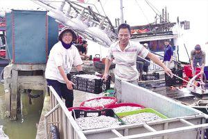 Ngư dân miền Trung vươn khơi đón 'lộc biển'