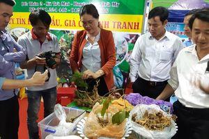 Xuất hiện hai củ sâm 'khủng' tại phiên chợ sâm Ngọc Linh