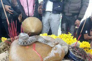 Xung quanh cặp 'rắn thiêng' ở Quảng Bình: Tuyên truyền người dân không sa vào các hoạt động mê tín dị đoan