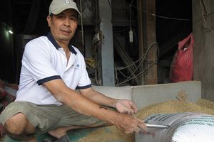 Chủ máy xay xát ở Bình Định đã tìm thấy người quên vàng trong bao lúa