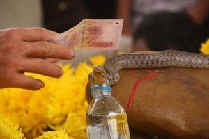 'Rắn thần' bị chuyển đi khỏi mộ, 260 triệu đồng tiền cúng rắn sẽ dùng thế nào?