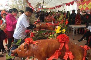 Lễ hội hàng trăm con lợn vàng rộm